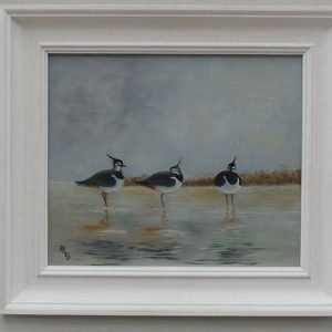 Phillip Goble 'A peaceful roost of Lapwings'' artwork