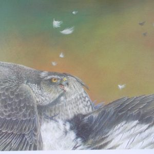 Roy Aplin: 'Sparrowhawk and magpie' limited edition print