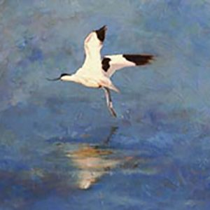cliff-avocet2