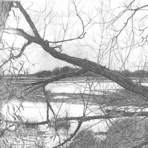 Lodmoor Morning is a graphite pencil on paper artwork by Dorset artist Ian Hedley