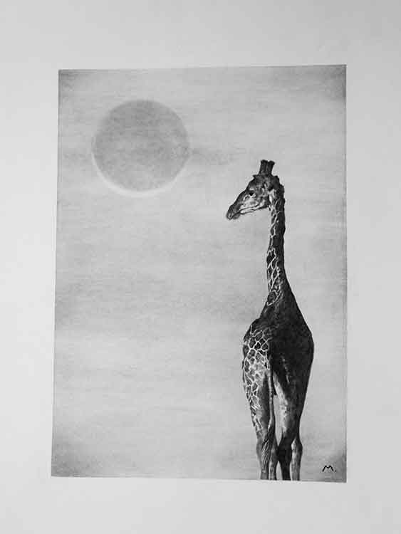 Silent Witness is an art print of a giraffe offered for sale by local Dorset artist Maryanne Pitman