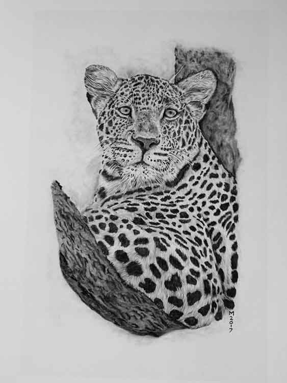 Tree Time big cat art print offered for sale by local Dorset artist Maryanne Pitman.