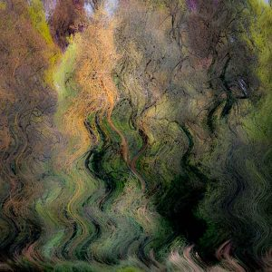 Fluid Forest limited edition print by Joost Lohman.